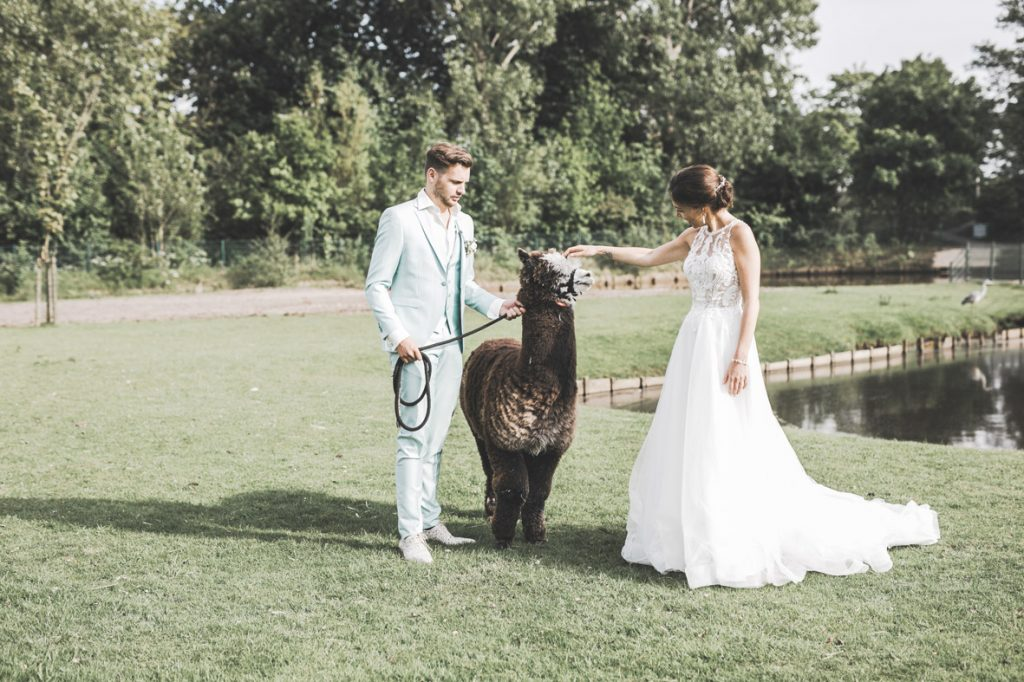 Bruidspaar met alpaca in natuur