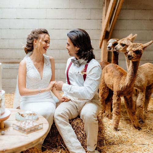 Bruidskoppel met alpacas op de achtergrond