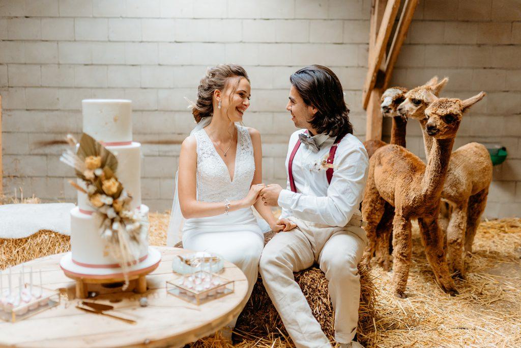 Koppel die gaat trouwen met alpaca's