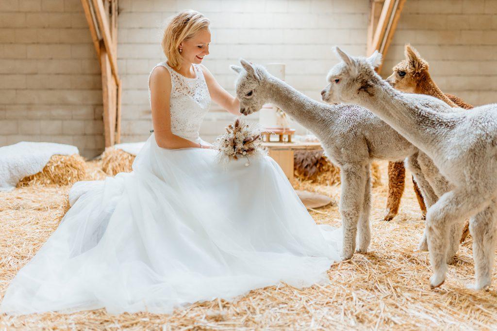 Mooie bruid met alpacas op de foto