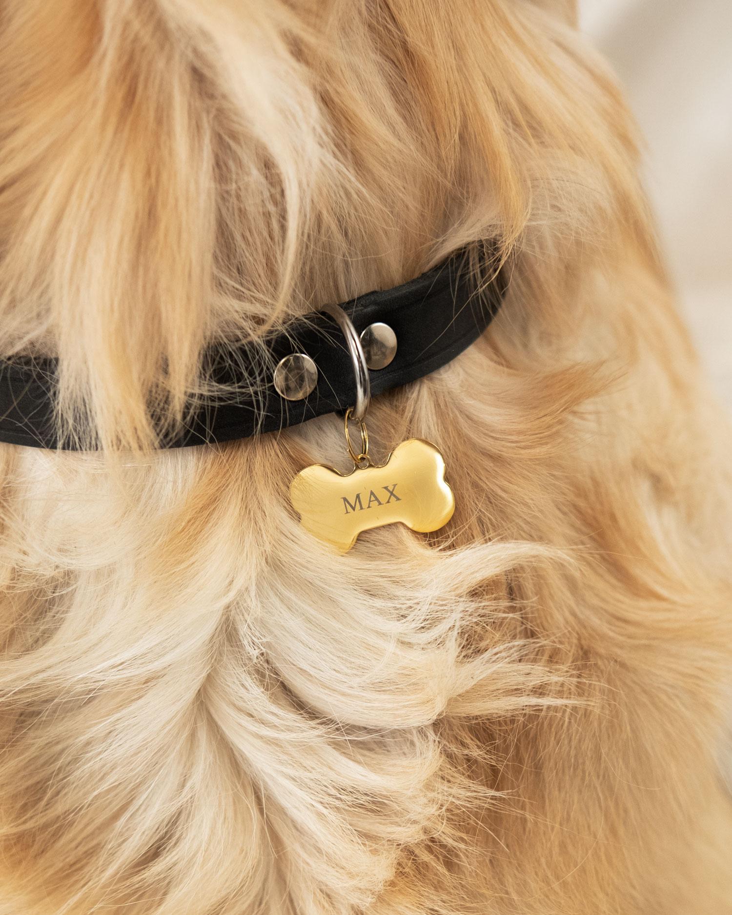 hond draagt gouden hondenpenning bot