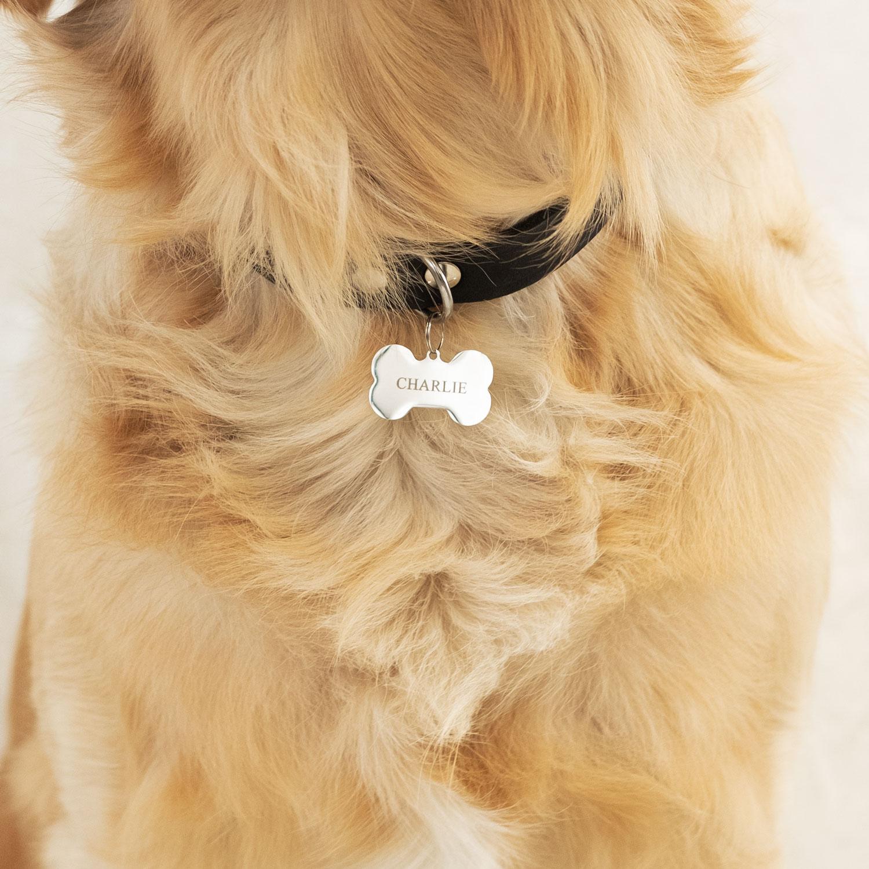 hond draagt zilveren bot hondenpenning