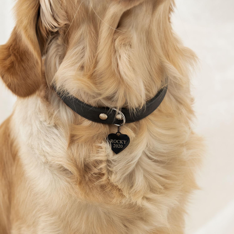 hond draagt zwarte hondenpenning hart