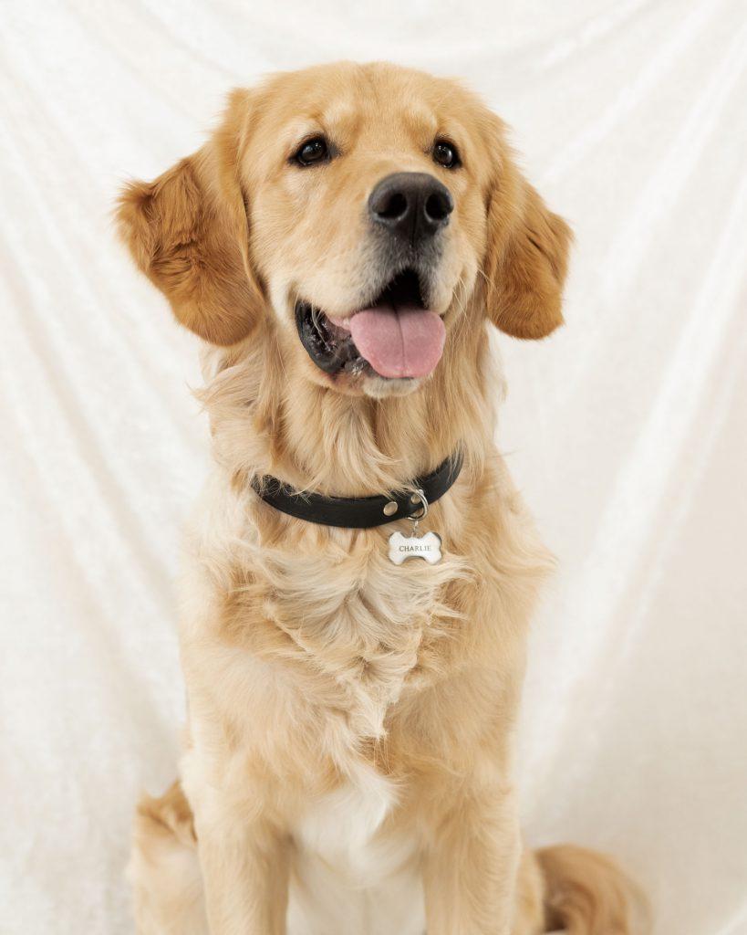 Hond met zilveren penning aan halsband