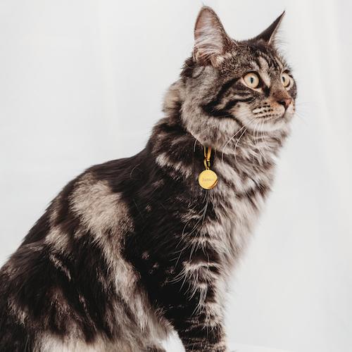 goudkleurige kattenpenning rond graveerbaar