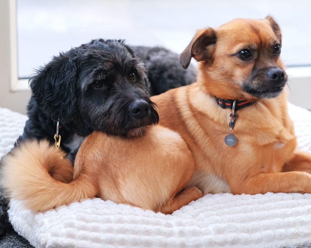 hondenpenningen graveerbaar DRKS